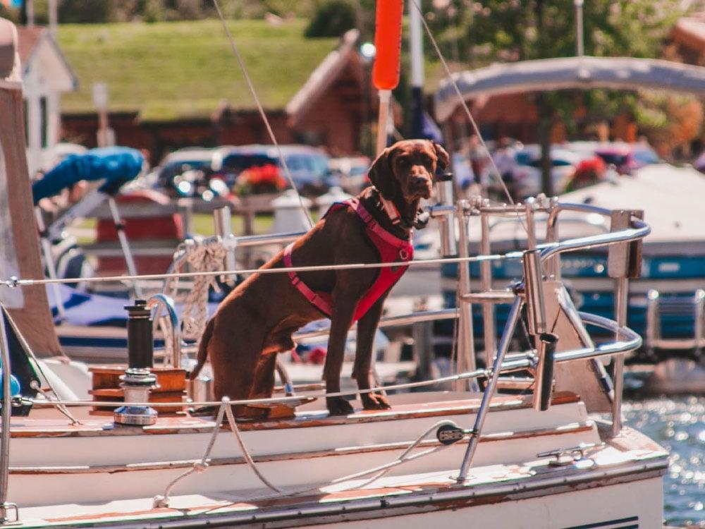 bootsurlaub mit hund, Yacht, boat