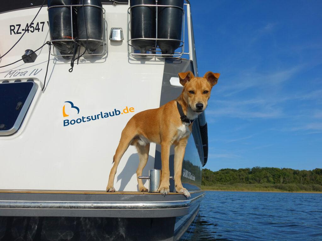 Hausboot mieten Hund an Bord Bootsurlaub.de
